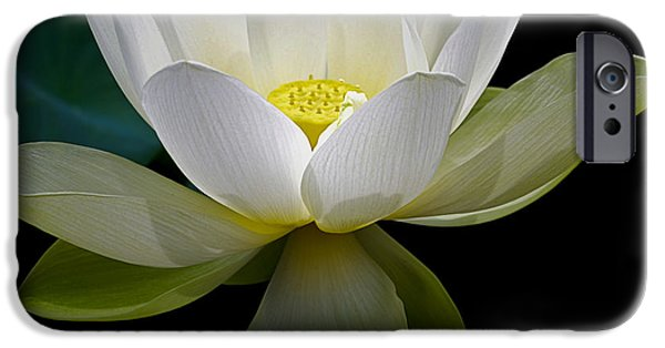 Symbolic White Lotus IPhone Case by Julie Palencia