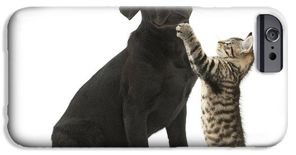 Tabby Male Kitten & Black Labrador IPhone Case by Mark Taylor