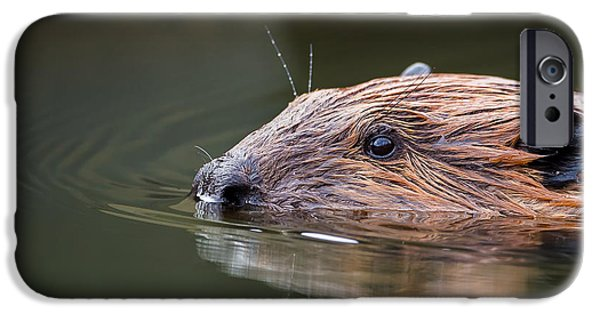The Beaver IPhone Case by Bill Wakeley