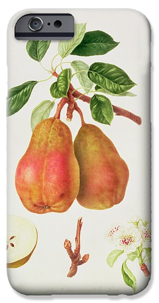 The Chaumontelle Pear IPhone 6s Case by William Hooker