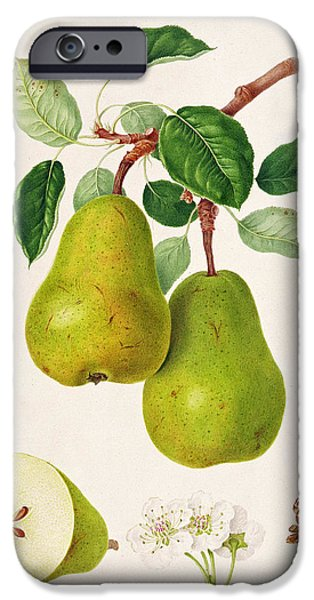 The D'auch Pear IPhone 6s Case by William Hooker