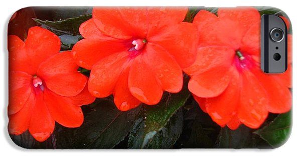 The Dew On The Sunpatiens IPhone Case by Zina Stromberg
