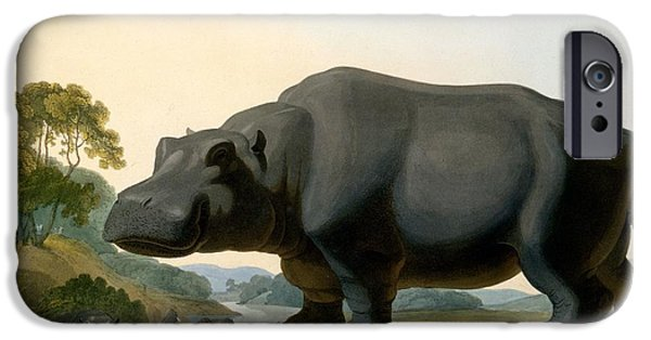 The Hippopotamus, 1804 IPhone 6s Case by Samuel Daniell