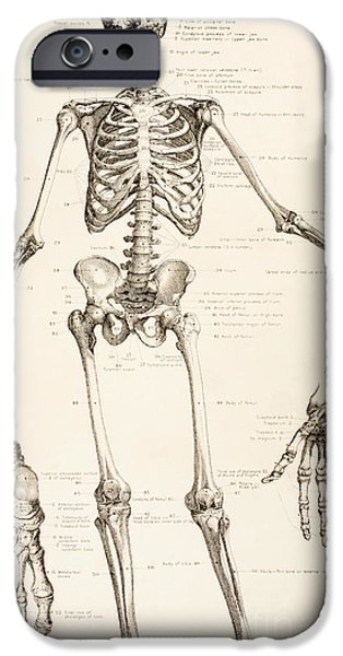The Human Skeleton IPhone Case by English School
