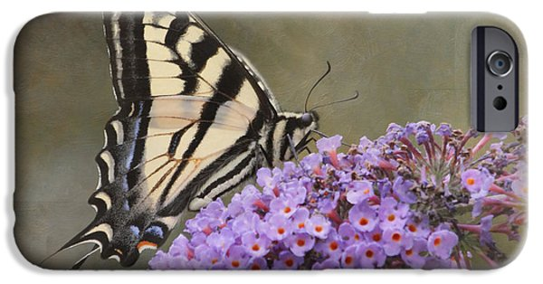 The Joy Of Nectar IPhone Case by Angie Vogel