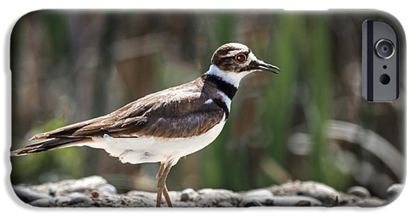 The Killdeer IPhone 6s Case by Robert Bales
