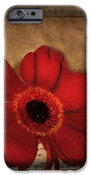 The Last Song IPhone Case by Georgiana Romanovna