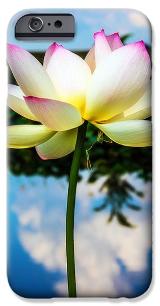 The Lotus Blossom IPhone Case by Jon Woodhams