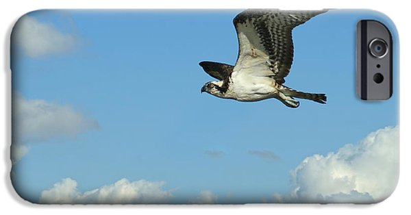 The Osprey 2 IPhone 6s Case by Ernie Echols