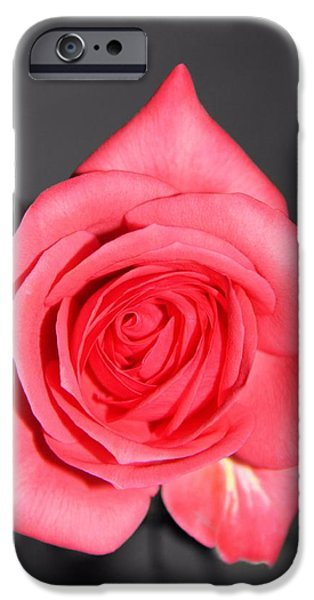 The Rose IPhone Case by Dan Sproul