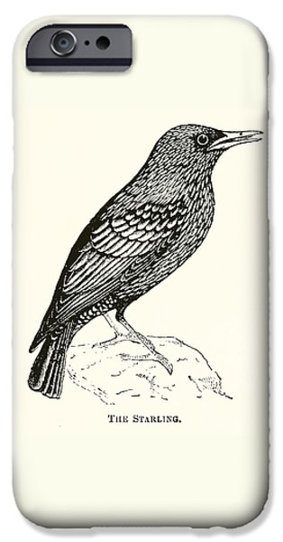 The Starling IPhone 6s Case by English School
