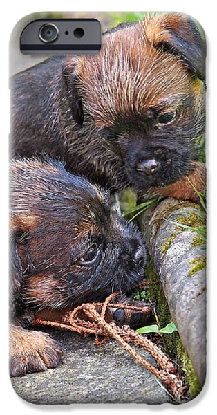 They Can Still See You - Border Terrier Puppies IPhone Case by Gill Billington