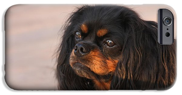 Thoughtful Cavalier IPhone Case by Kay Pickens
