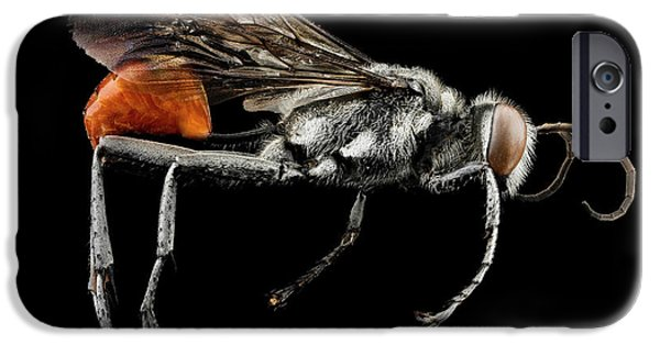 Thread-waisted Wasp IPhone Case by Us Geological Survey