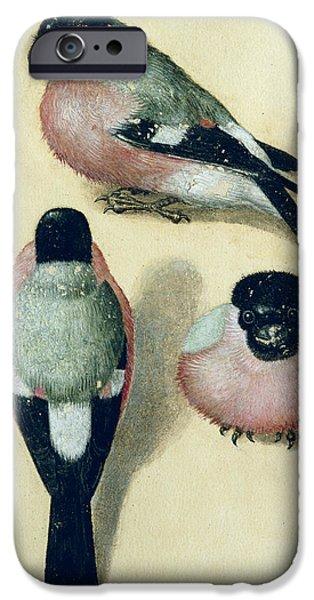 Three Studies Of A Bullfinch IPhone 6s Case by Albrecht Durer