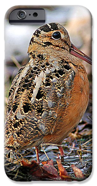 Timberdoodle The American Woodcock IPhone 6s Case by Timothy Flanigan