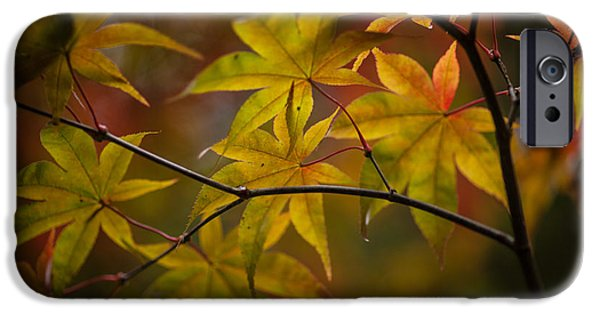 Tranquil Collage IPhone Case by Mike Reid