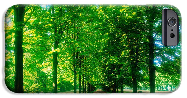 Tree-lined Road Dresden Vicinity Germany IPhone Case by Panoramic Images