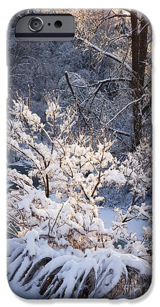 Trees In Forest After Winter Storm IPhone Case by Elena Elisseeva