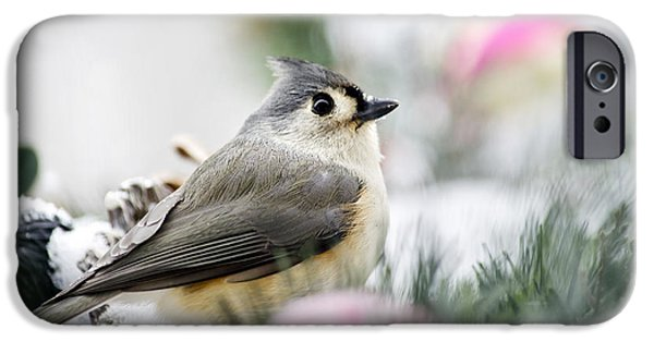 Tufted Titmouse Portrait IPhone 6s Case by Christina Rollo