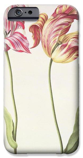 Tulips IPhone 6s Case by Nicolas Robert