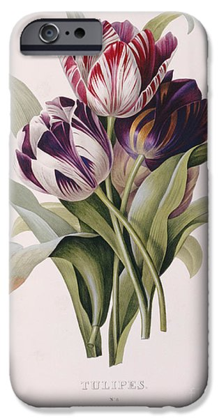 Tulips IPhone Case by Pierre Joseph Redoute