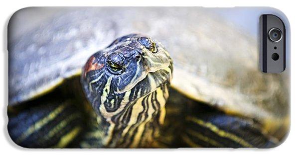 Turtle IPhone 6s Case by Elena Elisseeva