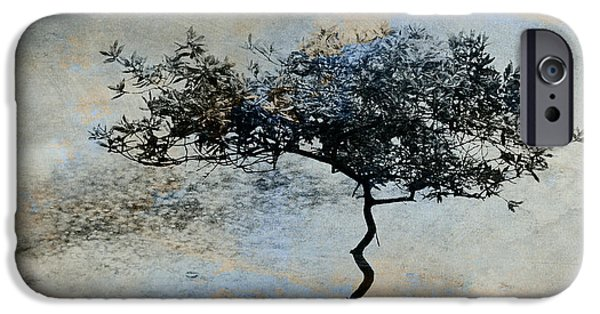 Twisted Tree IPhone Case by David Ridley