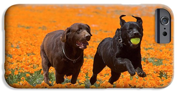 Two Labrador Retrievers Running IPhone Case by Zandria Muench Beraldo
