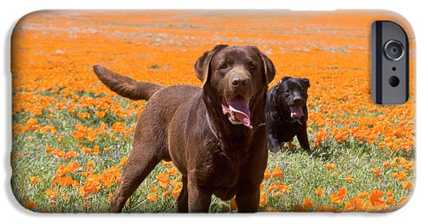 Two Labrador Retrievers Standing IPhone Case by Zandria Muench Beraldo