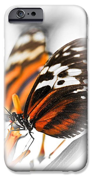 Two Large Tiger Butterflies IPhone Case by Elena Elisseeva