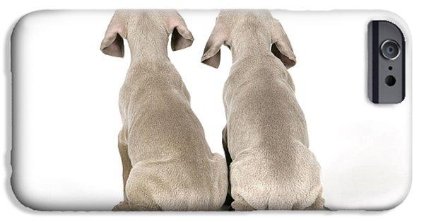 Two Weimaraner Puppies IPhone Case by John Daniels