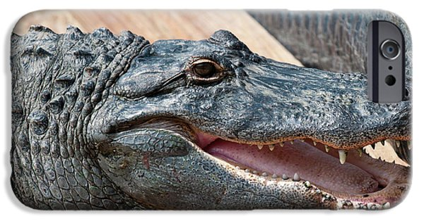 Usa, Florida Gatorland, Florida IPhone 6s Case by Michael Defreitas