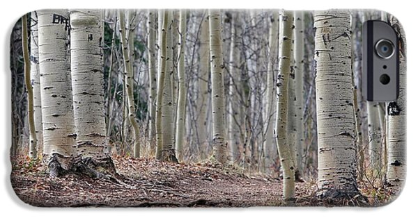 Vandalised Birch Trees IPhone Case by Michael Szoenyi