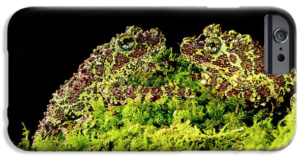 Vietnamese Mossy Frog, Theloderma IPhone Case by David Northcott