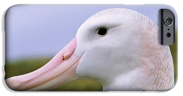 Wandering Albatross (diomendea Exulans IPhone 6s Case by Martin Zwick