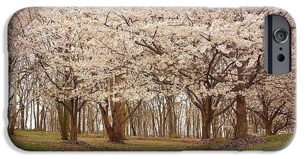 Washington Dc Cherry Blossoms IPhone Case by Kim Hojnacki