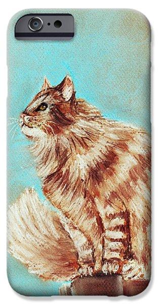 Watch Cat IPhone Case by Anastasiya Malakhova
