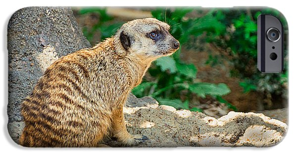 Watchful Meerkat IPhone Case by Jon Woodhams