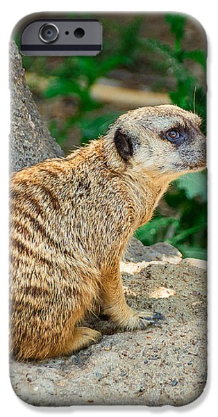 Watchful Meerkat Vertical IPhone Case by Jon Woodhams