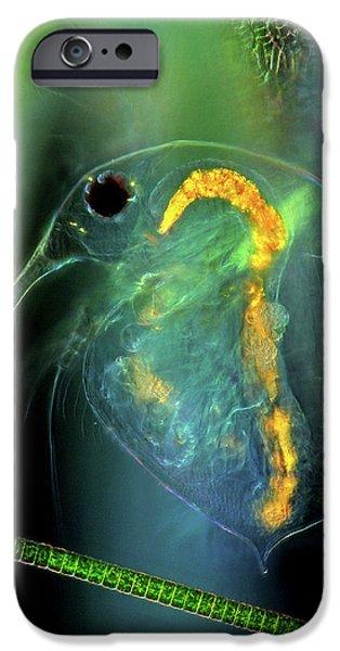 Water Flea And Desmid On Sphagnum Moss IPhone Case by Marek Mis