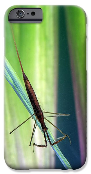 Water Stick Insect IPhone Case by Simon Booth
