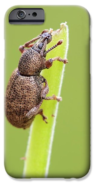 Weevil IPhone 6s Case by Heath Mcdonald
