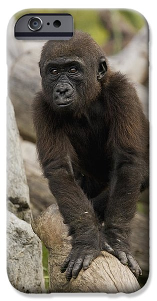 Western Lowland Gorilla Baby IPhone 6s Case by San Diego Zoo