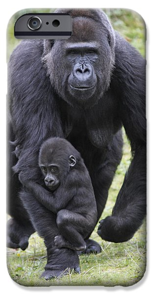 Western Lowland Gorilla Walking IPhone 6s Case by Duncan Usher