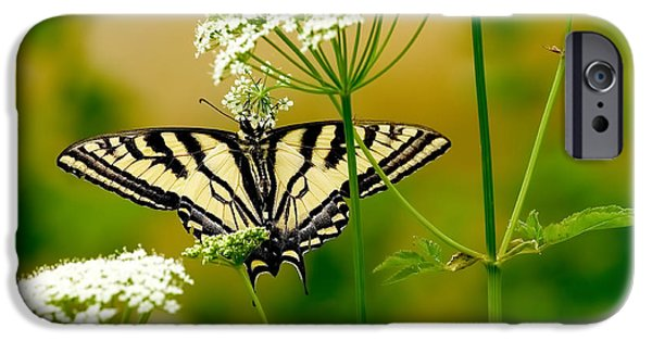 Western Tiger Swallowtail Butterfly IPhone Case by Sharon Talson