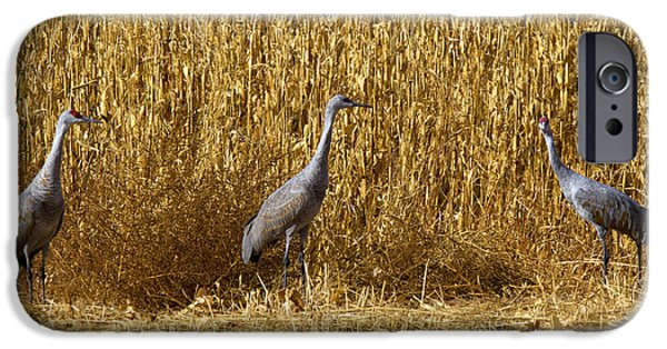 Where Is The Corn IPhone 6s Case by Mike  Dawson