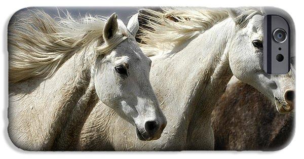White Beauties IPhone Case by Wildlife Fine Art