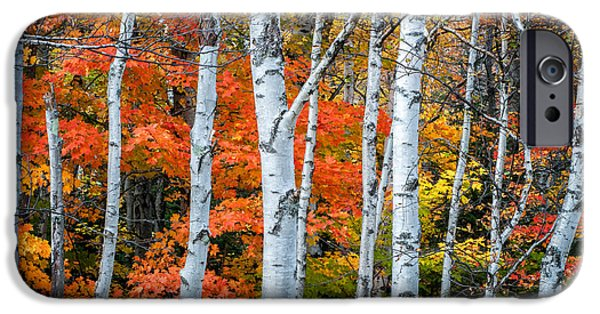 White Birch Forest - White Mountains IPhone Case by Thomas Schoeller