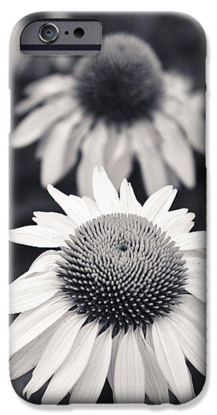 White Echinacea Flower Or Coneflower IPhone Case by Adam Romanowicz